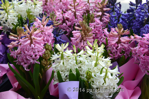 Hyacinth Flowers - Sonbol