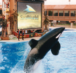 Sea World - San Diego  by QH